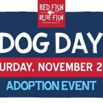 Red Fish Blue Fish Dog Day